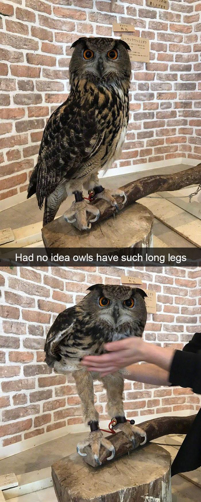 Animal Snaps