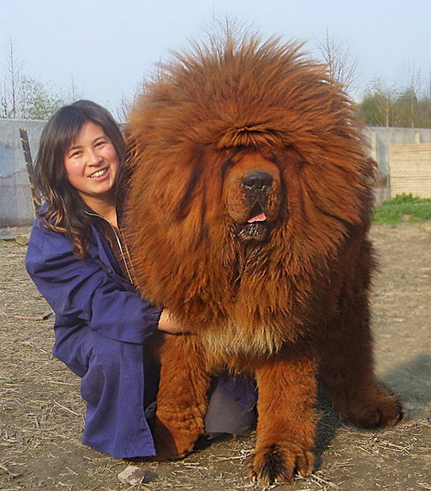 6. King size dogs, dog