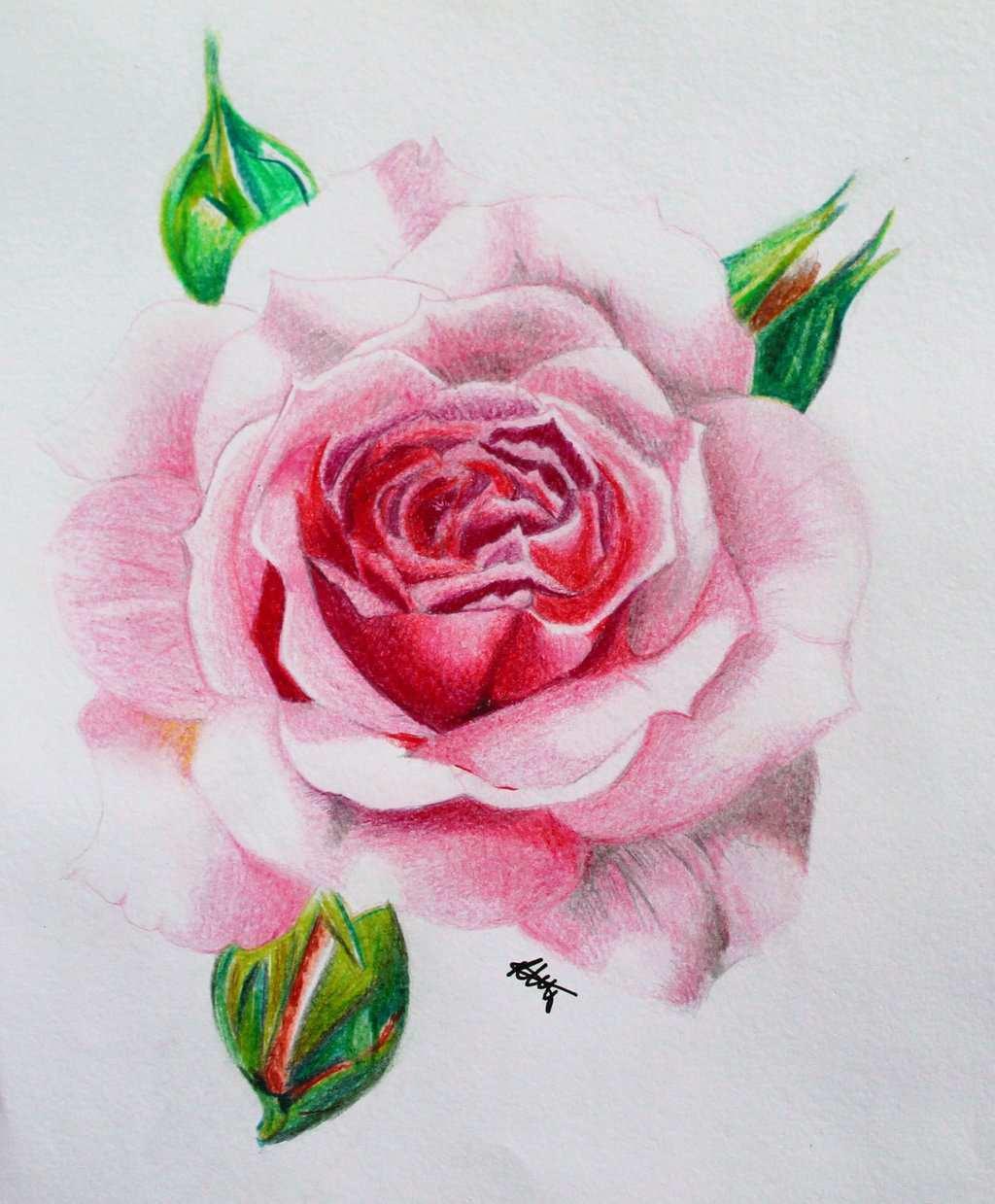 101+ Gambar Bunga Mawar Lukis Paling Keren