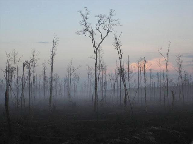 Hutan Nusantara Rusak 2,7 Juta Hektar Per Tahun