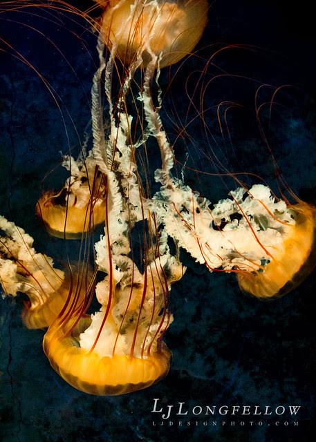 Summer Jellyfish 13/365