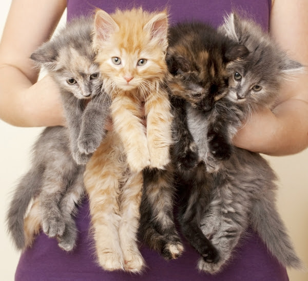 la historia de los gatos de disneyland 12