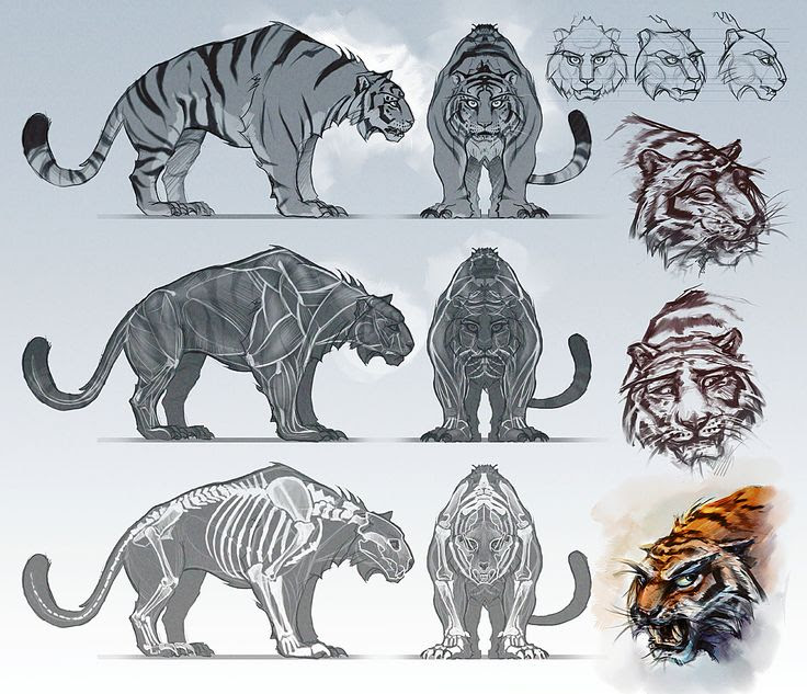 Animal blueprint model sheet | Reference Model Sheets | Pinterest