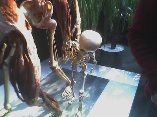 kid skeleton