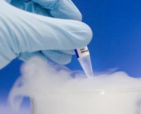 Embriones humanos congelados, con el uso cada día mayor que se hace de la fecundación in vitro, aumenta el número de embriones sobrantes que se congelan.