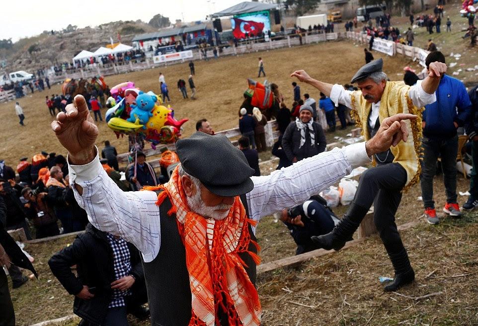 Бої верблюдів на щорічному фестивалі в Туреччині