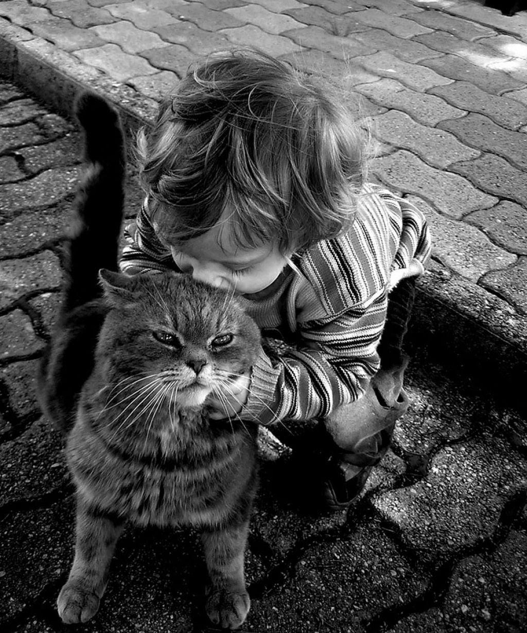 20 crianças brincando com seus gatos que alegrarão o seu dia 13