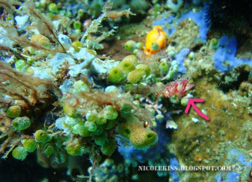 hidden nudibranch with arrow