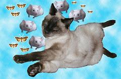every cat dreams