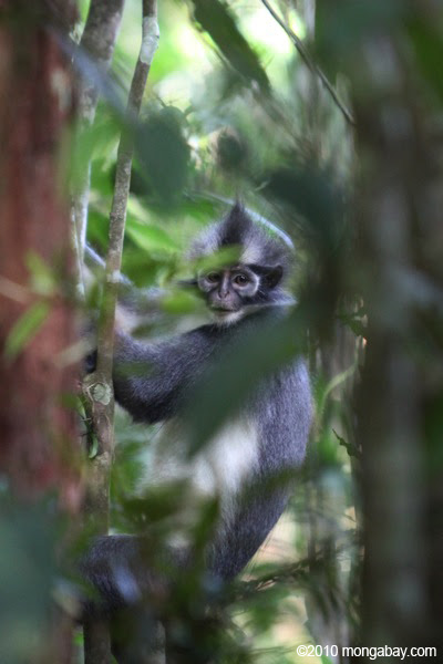 6000 Gambar Hutan Serta Hewan HD