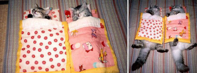 cats-before-and-after-pictures-1