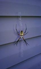 Friendly neighborhoos spider