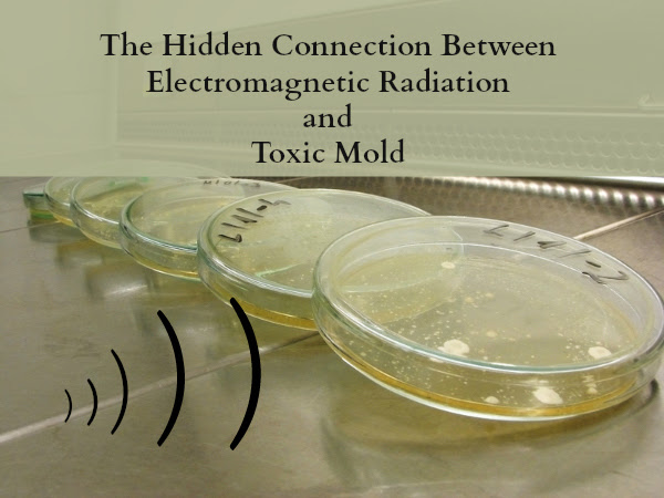 Connection between electromagnetic radiation and toxic mold
