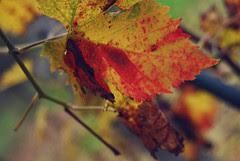 Bloody Leaf