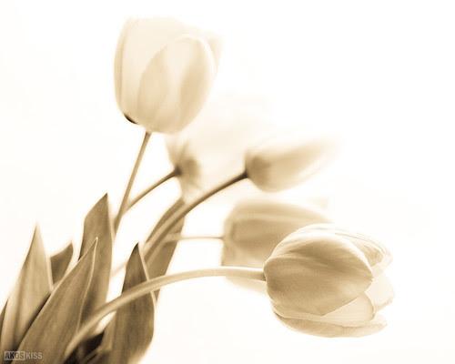 Tulipánok az ablakban