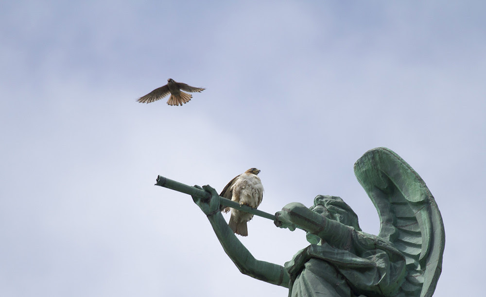 Kestrel vs Hawk