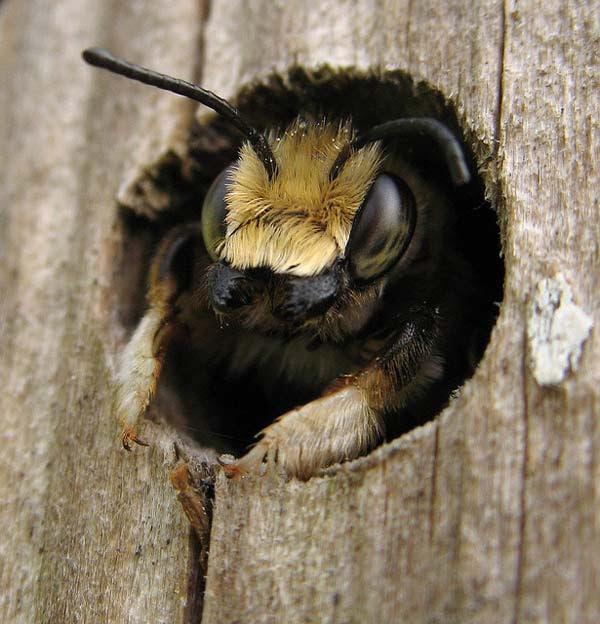 "perierga.gr - Καλωσήρθατε στο ""ξενοδοχείο μελισσών""!"