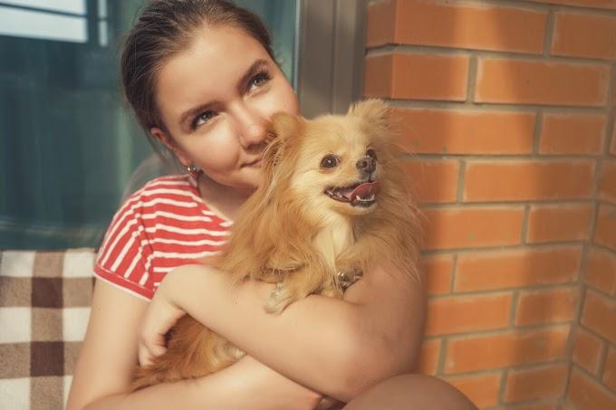 ¿Cuáles son los beneficios de la compañía de los perros?
