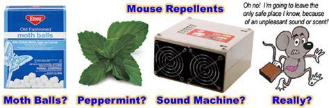 Do Mouse Repellents Work?   Peppermint, mothballs, ammonia, etc.