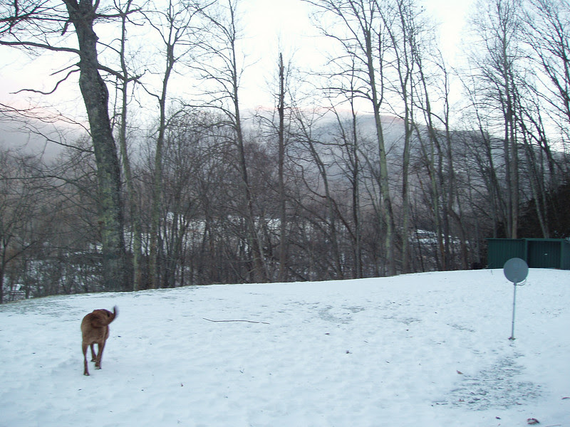 Enjoying the early morning, but treading carefully...ice underneath the snow cover.