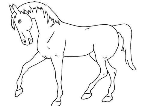 gambar sketsa hewan kuda gambar mania