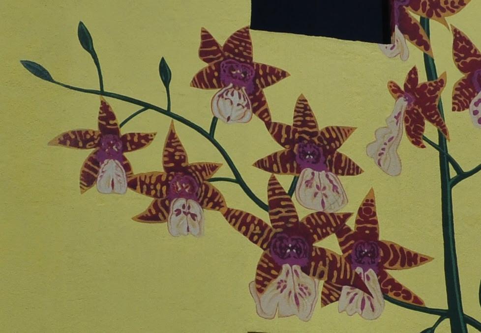 Phalaenopsis amboinensis 2
