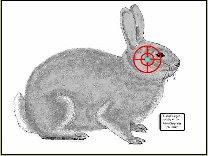 Tatget Bunny - Home