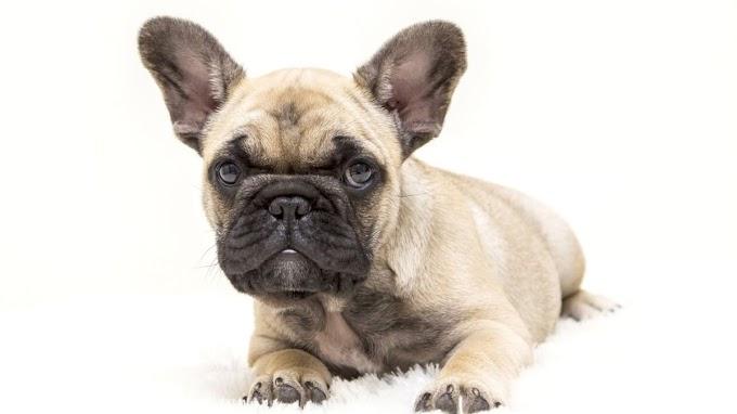 ¿Conoces los íncreíbles beneficios del spa para perros?