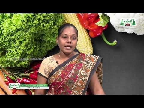 12th சத்துணவியல் அலகு 1 சிகிச்சை உணவியல் Kalvi TV