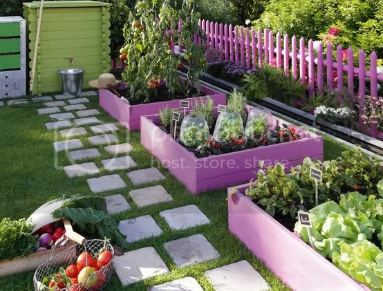 cute raised garden with purple fence