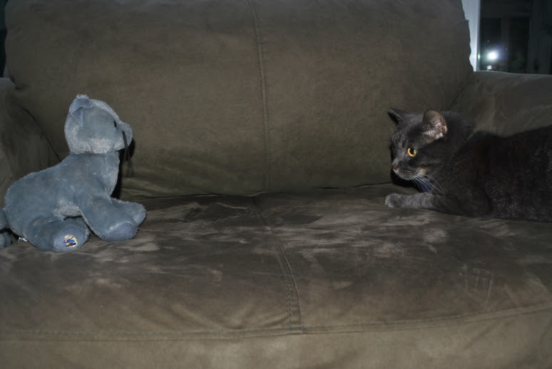 a gray cat and a stuffed gray cat have a staring contest