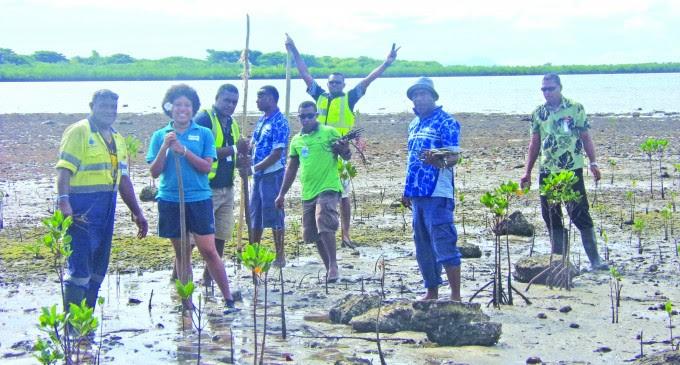 WAF-officials-planting-mangroves-at-Saweni-Beach-Lautoka-yesterday-680x365