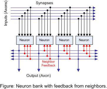 Figure: Neuron bank with feedback from neighbors.