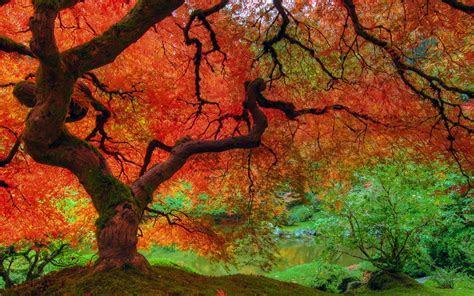 fall colors wallpaper backgrounds wallpaper cave