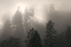 forest-fog-bright