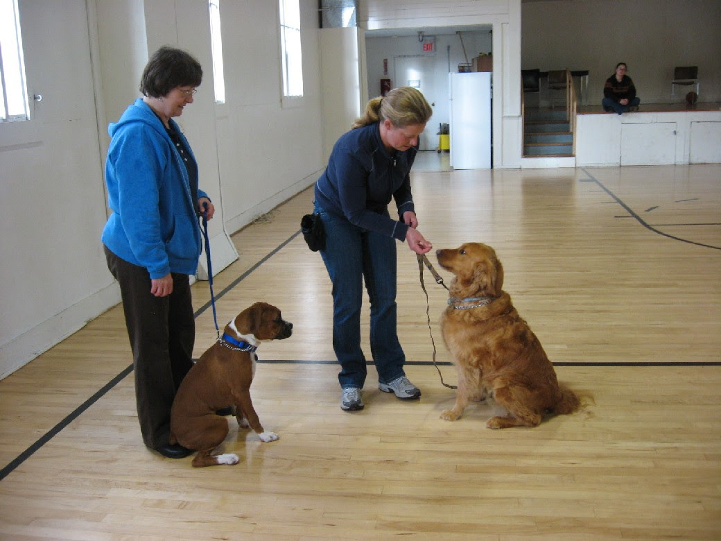 Juni 2016 Potty Train Your Puppy Dogmaster Trainers By Products Electric Fence Fencing Basic Dog Obedience Rogue Retrieversrogue Retrievers