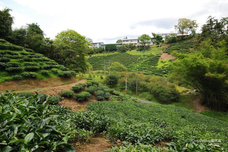 【南投】阿薩姆紅茶的故鄉。貓蘭山步道之旅DSC_1724