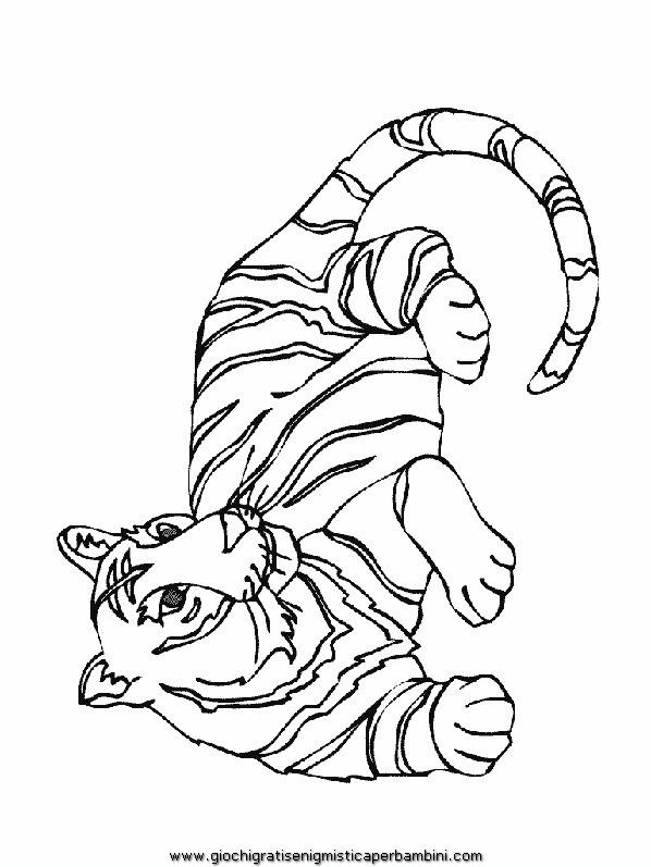 Disegni Da Colorare Di Animali Carnivori Coloradisegni