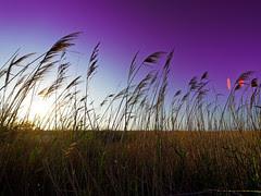 Purple breeze of change by Sator Arepo