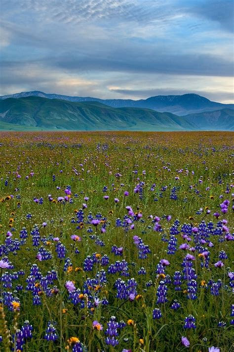 mountains landscapes fields california meadows blue