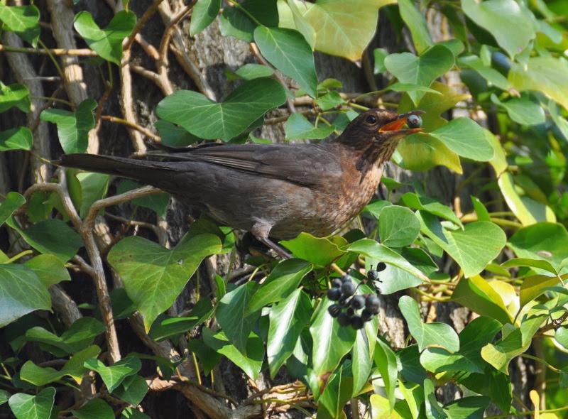 Vogel im Park