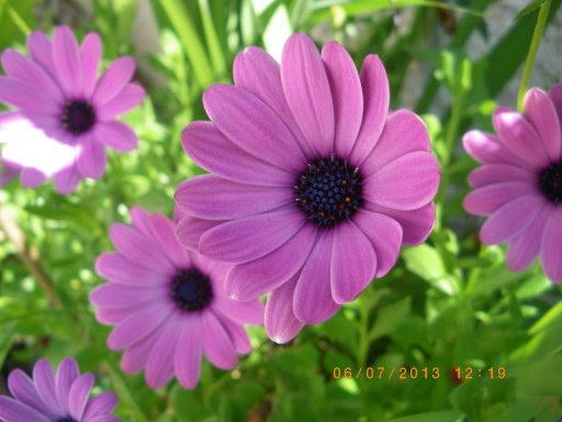 Flores Sencillas Pero Bonitas Para Los Cumpleañeros De Julio