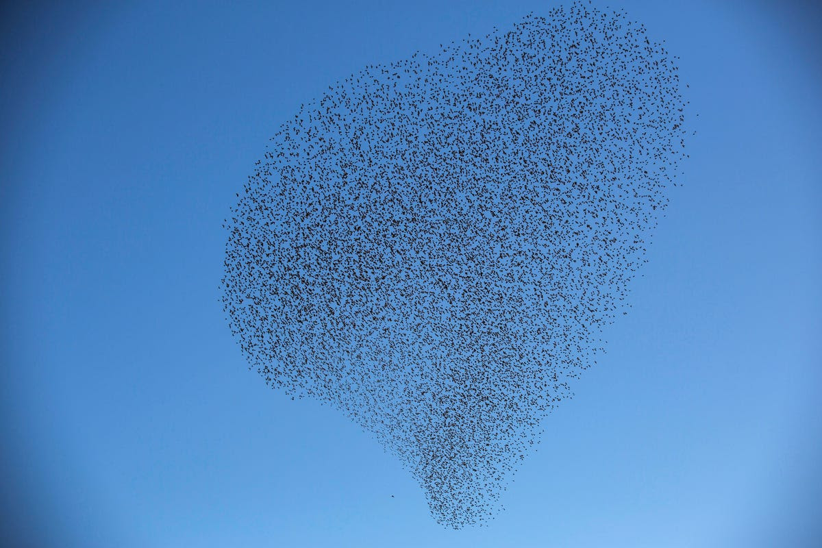 To some degree, physicists have managed to describe the random motion of murmurations with the same equations that they use to interpret phase transitions, like when a liquid turns to a gas.