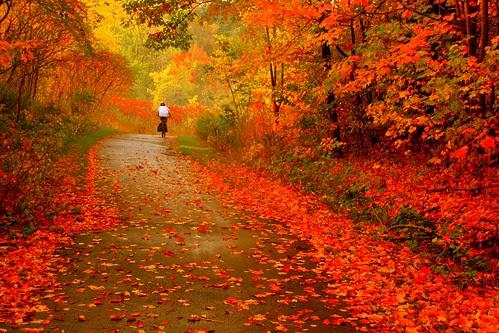 Imagini superbe Toamna poze peisaj Autumn Ride  !