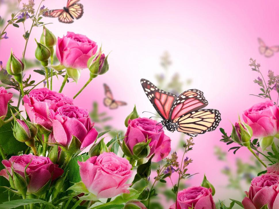 Pink roses, flowers, butterflies wallpaper | flowers ...