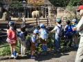 アフリカゾウを観察する騎士団
