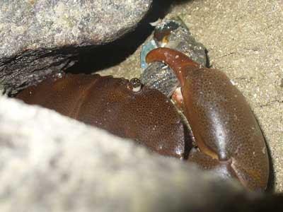 Crab&Snail