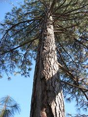 squirrel tree2