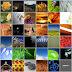 Flickr Wallpaper