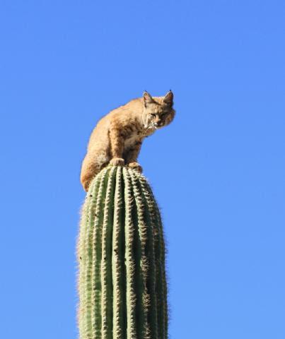 Resultado de imagen para cactus herido